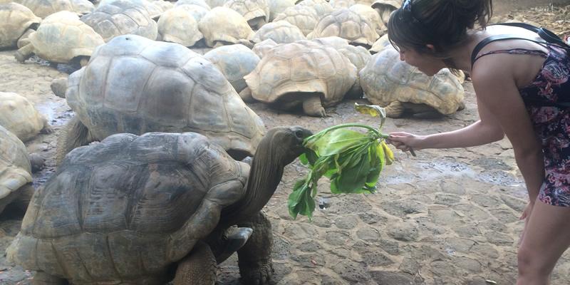 Nia feeding the turtles.