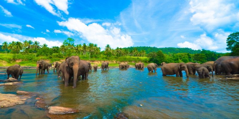 Travel blog: The Essential Travel Guide to Sri Lanka
