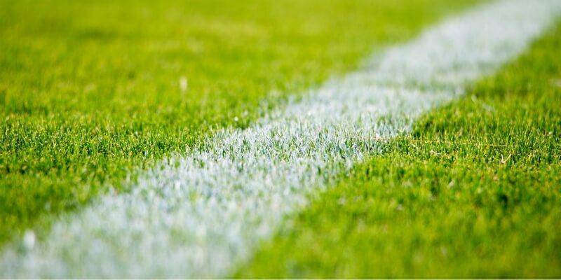 Grass on a sports field
