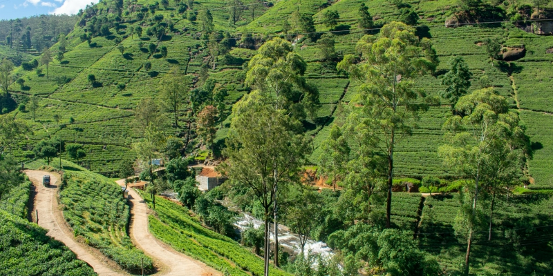 Sri Lankan tea country