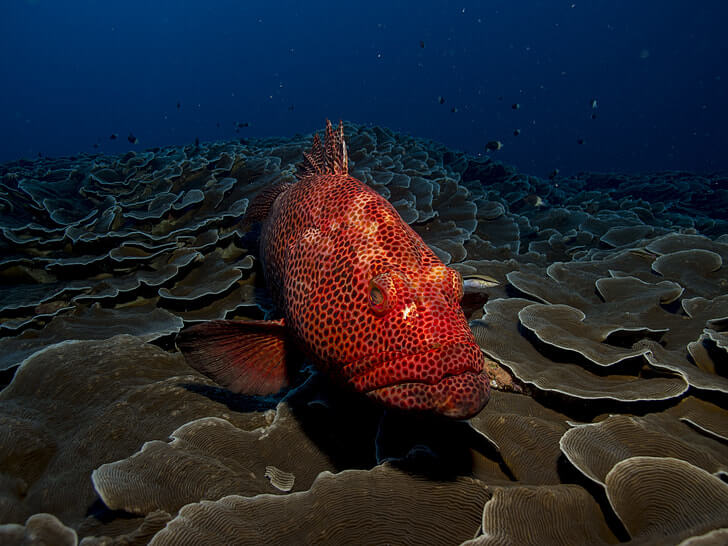 Red fish on the sea floor