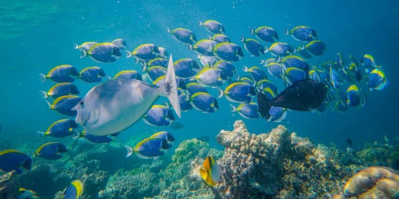 Tropical fish at home on the coral reef