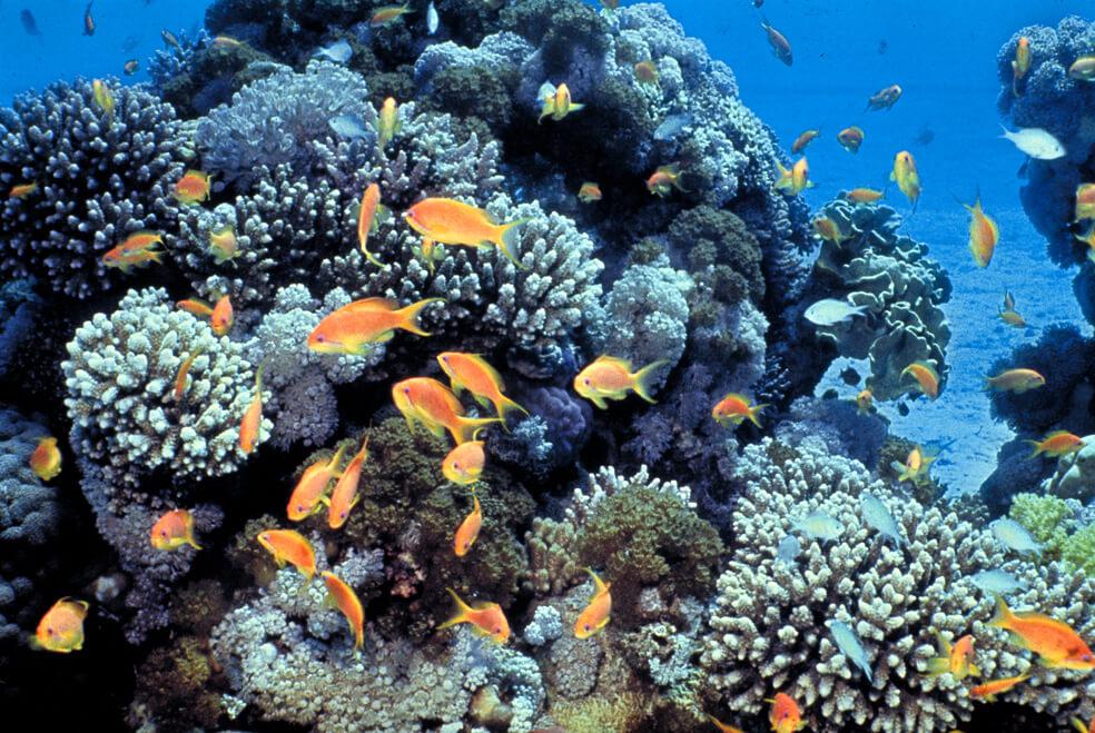 Fish swimming around coral