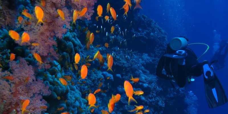 These are best dive sites in Mauritius
