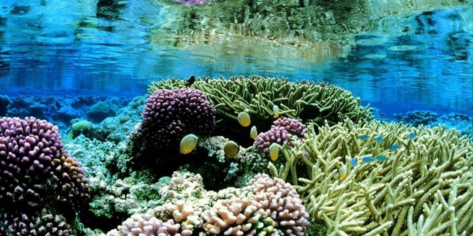 Underwater coral scene