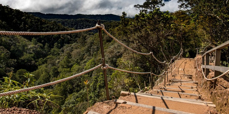 Steps leading up a tropical hill