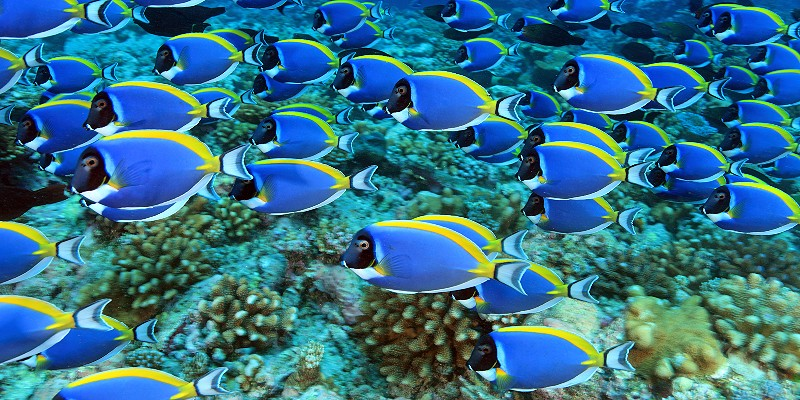 colourful reef fish swimming in tropical waters