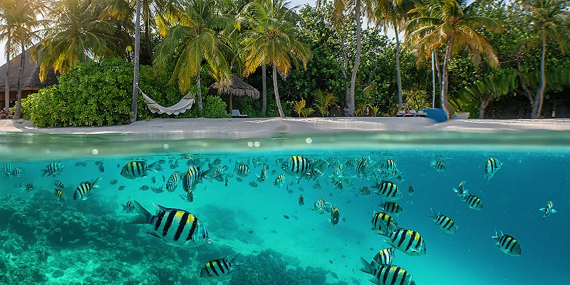 a picture showing fish swimming close to an island in the Maldives