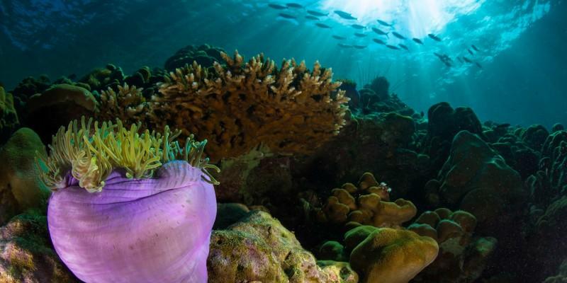 Underwater shot in Thailand