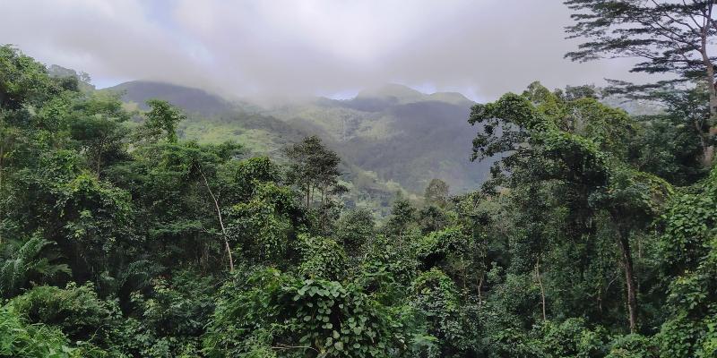 Morne Seychellois National Park. Image: Wikimedia