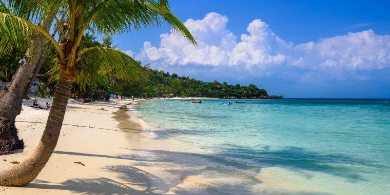 Coconut palms on Haad Yao beach